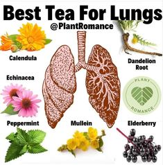 Natural Health Remedies, Natural Cures, Natural Healing, Herbal Remedies, Healing Herbs, Medicinal Plants, Natural Medicine, Herbal Medicine, Holistic Medicine