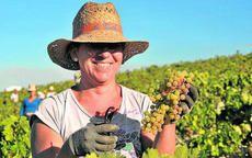 De la viña al consumidor: Un ejemplo de cadena agroalimentaria...