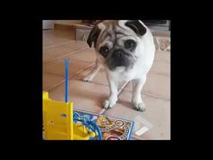 When Pug and Cat play board games http://www.lakatate.com/index.php/latest-videos/3192-when-pug-and-cat-play-board-games?utm_source=social&utm_medium=pin&utm_campaign=daily