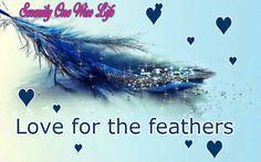 Blue Feather Digital Art HD desktop wallpaper, Drop wallpaper, Sparkle wallpaper, Feather wallpaper - Digital Art no. Feather Wallpaper, Lit Wallpaper, Glitter Wallpaper, Widescreen Wallpaper, Wallpapers, Unique Wallpaper, Computer Wallpaper, Blue Backgrounds, Wallpaper Backgrounds