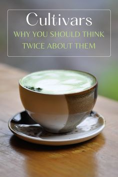 CULTIVARS: WHY YOU SHOULD THINK TWICE ABOUT THEM Green Tea Smoothie, Tea Smoothies, Japanese Green Tea Matcha, Matcha Green Tea, Tea Club, Tea Plant, Green Tea Benefits, Tea Companies, Yummy Drinks