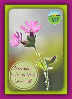 November isn't winter in Cornwall.
