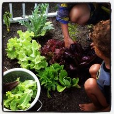 Planting A Seed...Children who love to Gardening!