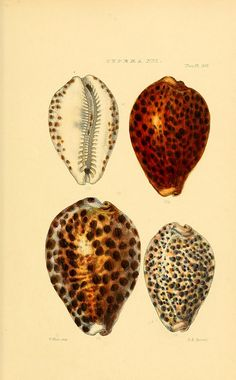 n92_w1150 by BioDivLibrary, via Flickr