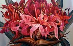 Image result for gymea lily images