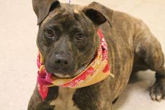 NAME: Jane  ANIMAL ID: 27785173  BREED: Pit mix  SEX: female (spayed)  EST. AGE: 2 yr  Est Weight: 45 lbs  Health: heartworm neg  Temperament: dog friendly, people friendly.  ADDITIONAL INFO: RESCUE PULL FEE: $15  Intake date: 5/9  Available: Now
