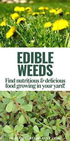 Did you know many common weeds are edible -- AND delicious? Also very nutritious! Is your yard overrun by dandelions? Enjoy the free food! Did you know many common weeds are edib Gardening For Beginners, Gardening Tips, Pallet Gardening, Kitchen Gardening, Fairy Gardening, Flower Gardening, Healing Herbs, Natural Healing, Medicinal Weeds