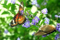 FREE THINGS TO DO IN THE USA: BUTTERFLY GARDEN IN LOUISVILLE, KY The Louisville Nature Center is a great spot to get in tune with nature. It offers educational programs for kids and adults in an urban forest. There's also a butterfly garden, wildflower pond, hiking trails, a bird blind, exhibits, and rental spaces.