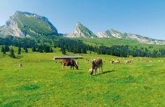 Heiss wars auf dem Brisi | Schweizer Familie