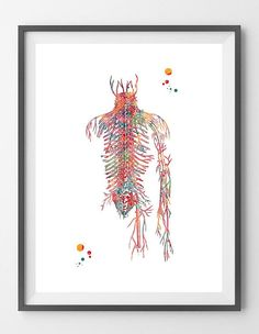 Hey, I found this really awesome Etsy listing at https://www.etsy.com/listing/555972024/circulatory-system-watercolor-print