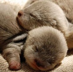 Little otters!!