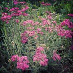 Plant Magic + Medicine