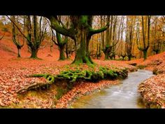 ▶ 2 HOURS of The Best Relaxing Music - Sleep and Spa Music by RELAX CHANNEL - YouTube