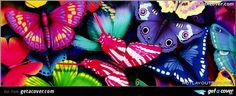 A stunning Colorful butterflies facebook cover for your FB timeline. Choose from thousands of new Our pick timeline covers with live preview.