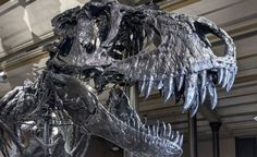 How the darkness and the cold killed the dinosaurs #Geology #GeologyPage
