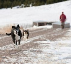 Runaway Dogs: Learn how to make your dog return to you with these tips. | Dog Fancy