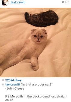 MEREDITH AND OLIVIA are, like, the luckiest cats alive ♡♡