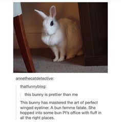 Bunny on fleek