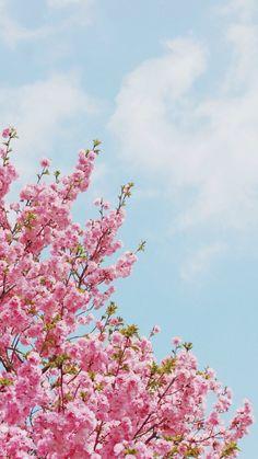 - nobody cares - Wallpaper Nature Flowers, Flower Background Wallpaper, Flower Phone Wallpaper, Summer Wallpaper, Kawaii Wallpaper, Flower Backgrounds, Pink Wallpaper, Wallpaper Backgrounds, Spring Aesthetic
