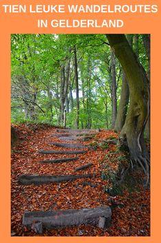 Tien leuke wandelroutes in Gelderland. Geniet van de uitdagende hoogteverschillen in de bossen. Wandel langs de grote rivieren, over de heidevelden en door sfeervolle stadjes.  Van Trage Tochten tot struinroutes tot stadswandelingen.  Gelderland heeft het allemaal! #gelderland #wandelen #wandelinspiratie #wandelroutes #boswandeling Holland, Map Pictures, Walkabout, Outdoor Fun, Places To See, Countryside, Netherlands, Paths, Travel Inspiration