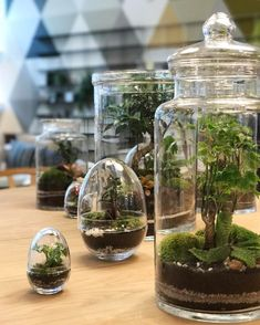 """718 Likes, 18 Comments - The Conran Shop (@theconranshoplondon) on Instagram: """"The terrariums from Green Factory have landed  #shapedbyconran #theconranshop"""""""