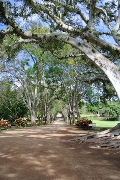 A tree lined entryway at Dillingham Ranch in Hawaii.  To see more images for a Hawaii destination wedding, click here:  http://blog.mangomuseevents.com/2012/11/30/dillingham-ranch-serene-and-stylish/