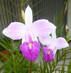 Flor de Mayo ...tierna y resplandeciente