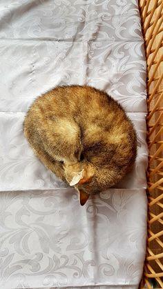 Kitty cat #cat #catsonpinterest #kitty #gold #goldcat #catpinterest #pinit #nature #animal #animallover #loveanimals #chill #sleep #nature #sleepingcat #littlecat #cute #cuteness #cutecat #follow Old Cats, Cat Cat, Chill, Sleep, Kitty, Nature, Cute, Gold, Animals