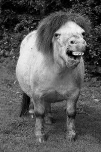 ugly horse pictures