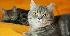 Dr H, Cats, Articles, Cat Games, Stuff Stuff, Cats And Kittens, Pet Store, Smallest Dog, Gatos