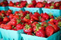 strawberry picking at patty's berries and bunches in mattituck, ny (long island).
