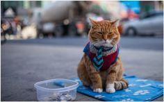Cat In Suit Funny Wallpaper | cat in suit funny wallpaper 1080p, cat in suit funny wallpaper desktop, cat in suit funny wallpaper hd, cat in suit funny wallpaper iphone