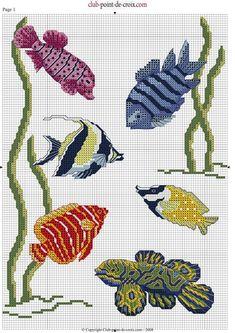 [pesci-tropicali%255B6%255D.jpg]