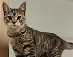 Stevie was adopted!