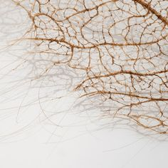 Tree Leaves Made of Stitched and Knotted Human Hair