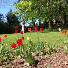 Beautiful tulips in the garden of La Creuzette. Spring is in full bloom! Garden, Bloom, Plants, Tulips
