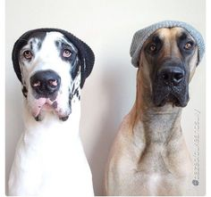 "We are not happy about this ""dogs with hats thing"". Not at all, and we want you to know it !!!"