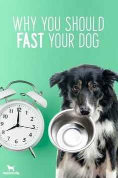 When you're sick ... you may not really feel like eating. And that break does wonders for your digestive system.  The same logic goes for your dog.  Fasting your dog can provide a number of health benefits AND plays a big role in supporting her immune system.  Take the next 5 minutes and join CEO of Dogs Naturally Magazine Dana Scott as she talks about how fasting can benefit your dog ...