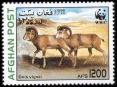 Urial (Ovis orientalis vignei)
