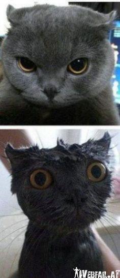 Mal wieder 'ne Katze baden...