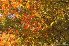4249 http://www.kurtjohnsonphotography.com/