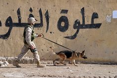 A U.S. Marine Corps Military Working Dog Handler and his K-9 partner assigned to 2nd Squad, 3rd Platoon, L Company, 3rd Battalion, 5th Marine Regiment, 1st Marine Division, patrol an area in Fallujah, Iraq, on Nov. 15, 2004, during Operation Al Fajr, in the Al Anbar Province of Iraq, during Operation Iraqi Freedom.  (U.S. Marine Corps photo by Lance Cpl. James J. Vooris) (Released)   (Photo seen on  http://www.visualintel.net)
