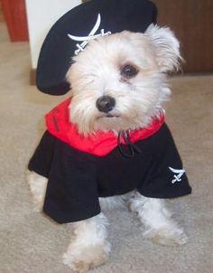 Disfraces de Haloween para tu mascota | Cuidar de tu mascota es facilisimo.com