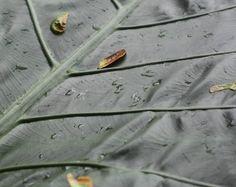 Hawaiian Lush Rain