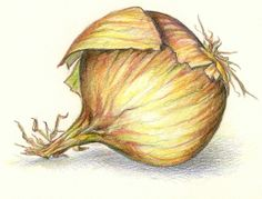 onion drawing Pencil Shading, Color Pencil Art, Pencil Drawings, Pastel Drawing, Painting & Drawing, Onion Drawing, Pineapple Drawing, Vegetable Painting, Scientific Drawing