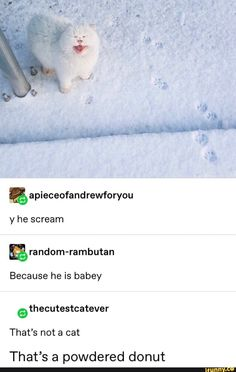 Picture memes 1 comment — iFunny - Because he is babey That's not a cat That's a powdered donut – popular memes on the site iFun - Funny Animal Memes, Funny Animal Pictures, Cute Funny Animals, Cat Memes, Cute Baby Animals, Funny Cute, Animals And Pets, Cute Cats, Funny Memes