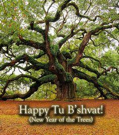 Happy Tu B'shvat!