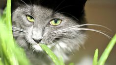 9 Houseplants That Could Kill Your Pets http://www.rodalesorganiclife.com/garden/9-houseplants-that-could-kill-your-pets