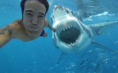 funny photos, funny pics, funny things  #OMG #fishes #funny #lol #ocean #selfies #sharks #wtf