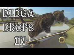 Check out this week's Sunday Catinee, featuring Didga showing off some of her cool moves at a local skate park: http://www.sparklecat.com/weird-cat-videos/sunday-catinee-skater-park-kitty